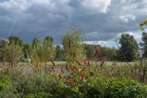 landschapstuin najaar friesland 11