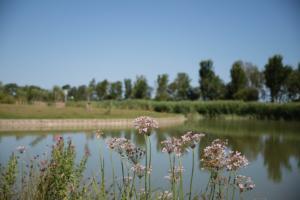 2018-07 tuin overbeek (17)