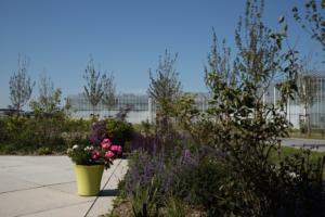 2018-07 tuin overbeek (6)