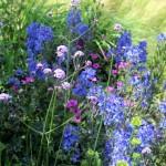 tuininspiratie en tuinoplossingen vind je bij tuinman Van Tuinen