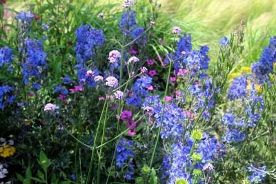 Tuinman gezocht hovenier van tuinen tuinservice maakt jouw tuin mooi