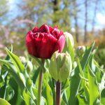 Volop Voorjaar en Volop Tuin