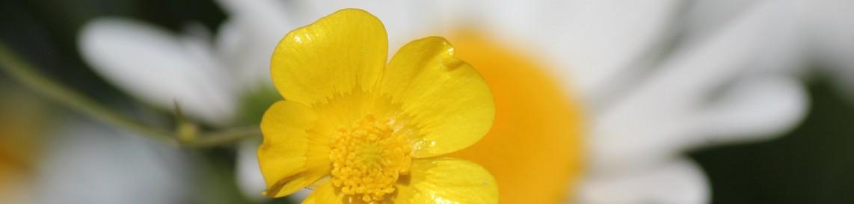 Van Tuinen Tuinservice - vriendelijk voorjaar