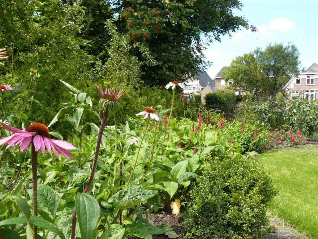 bloementuin het hele jaar door genieten van de tuin