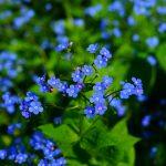 Prachtige bloemen voor de kleigrond