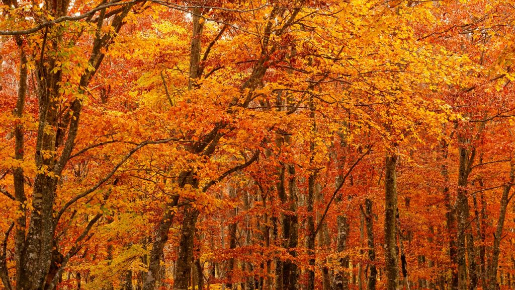 herfst in TuinBabbel