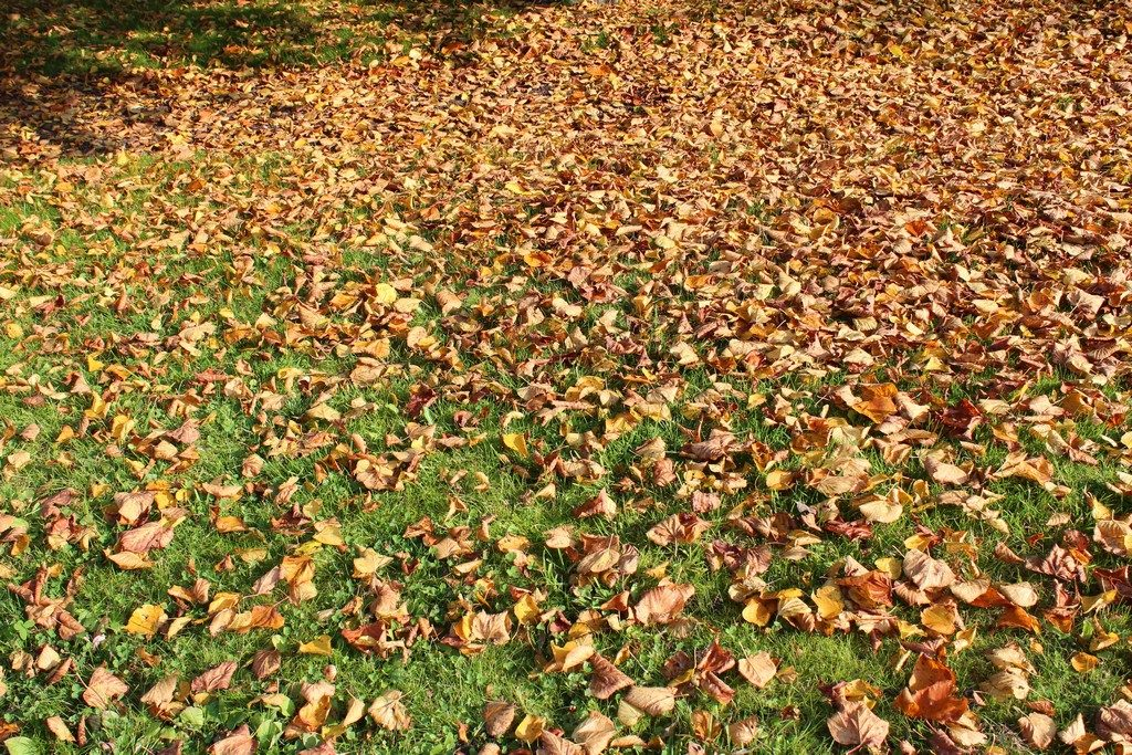 herfstbladeren voor mulchen