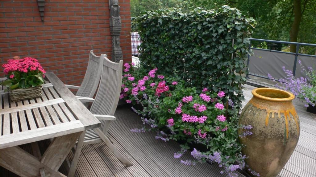 Strak dakterras met ondiepe plantenbakken en muur van hedera - Gespannen terras ...