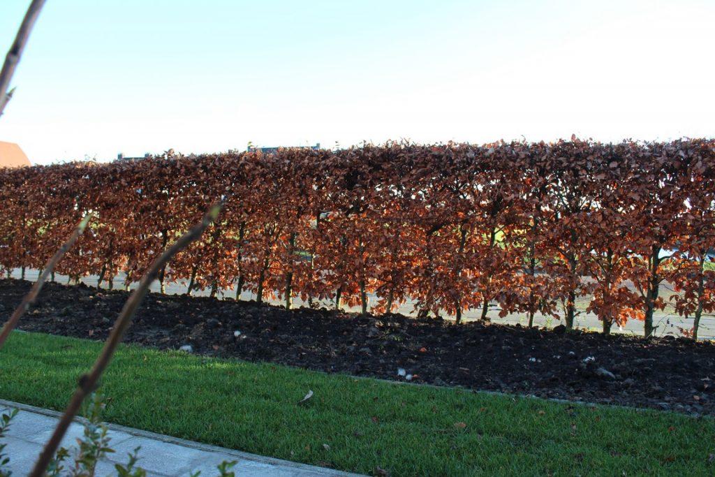 tuinrenovatie eind november
